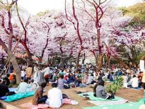 hanami picnic japan