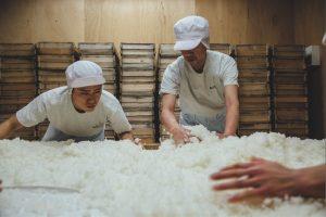 deux brasseurs de saké s'occupent du riz dans la kura