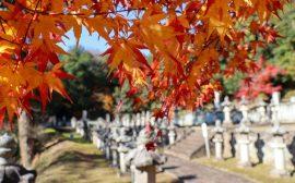 paysage d'automne au Japon avec des feuilles d'érable et un cimetière en fond